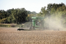 Minnesota's soybean and corn harvest is underway with soybean yields of 45 to 70 bushels per acre. Western Minnesota has escaped the heavy rains that have ruined crops and slowed the harvest to the south. Randy Mikkelson harvests soybeans just north of Benson Monday.
